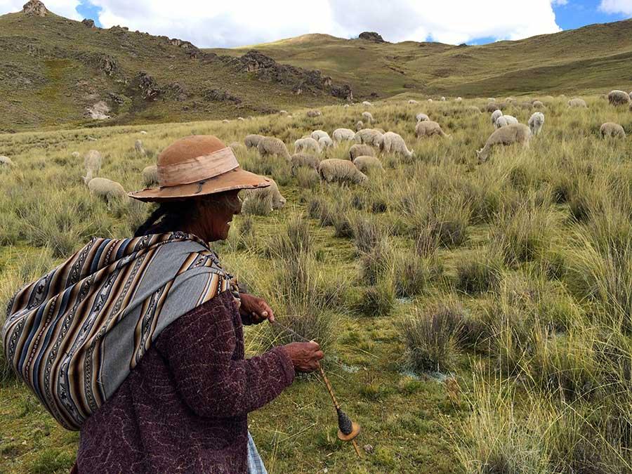 alpaca wol
