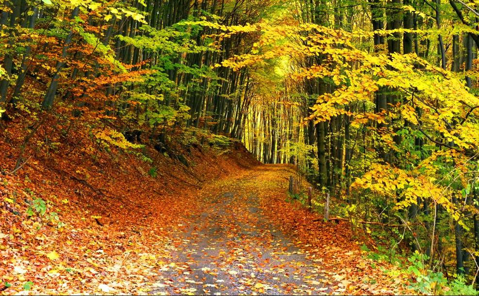 De mooie natuur in de herfst