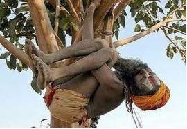 Slapen in een boom