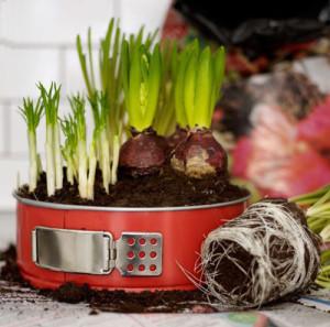Maak een bijzondere bloempot van een oude taartvorm