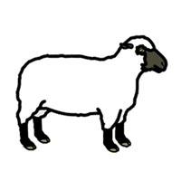 wol van een schaap in een wollen dekbed van yumeko